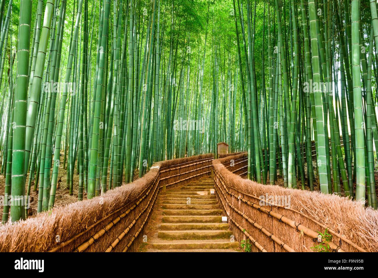 Kyoto, Japón, en el Bosque de bambú. Imagen De Stock