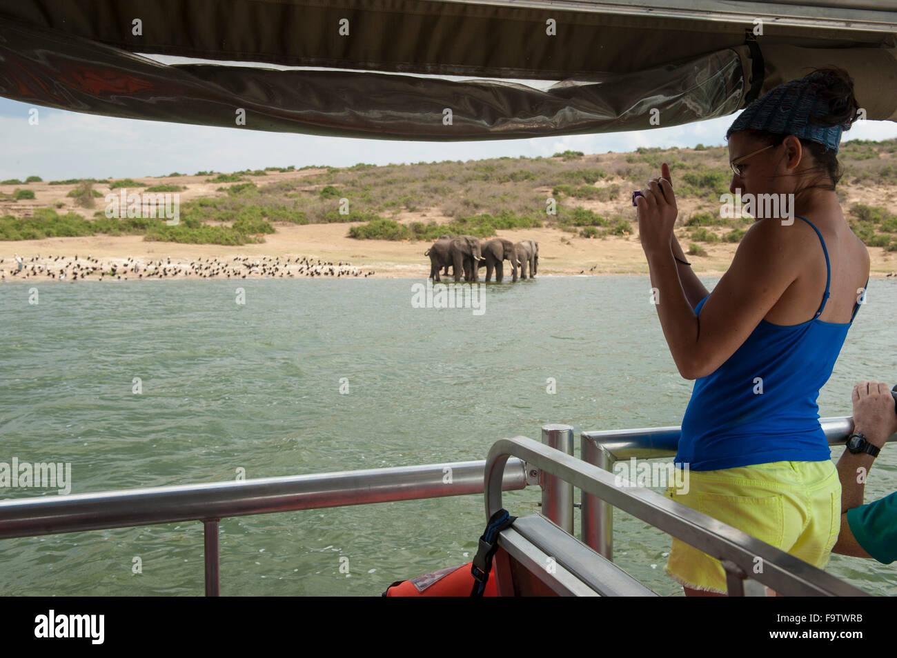 Viaje en barco por el canal Kazinga, elefante africano (Loxodonta africana africana), el Parque Nacional Queen Elizabeth, Imagen De Stock