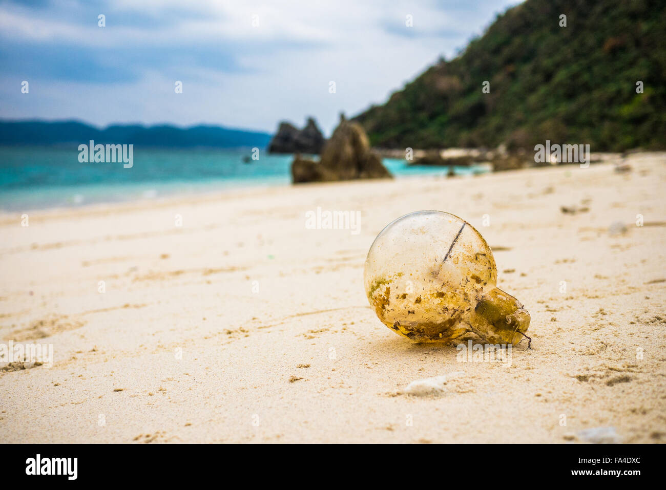 Bombilla varada en playa de islas de Kerama, Japón Imagen De Stock
