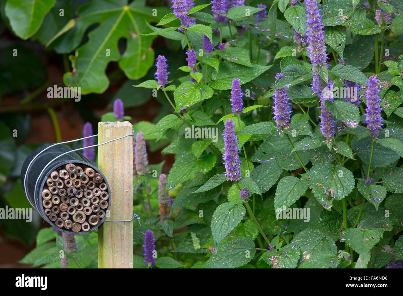 Verificación de red mason bees llena con tubos huecos Imagen De Stock