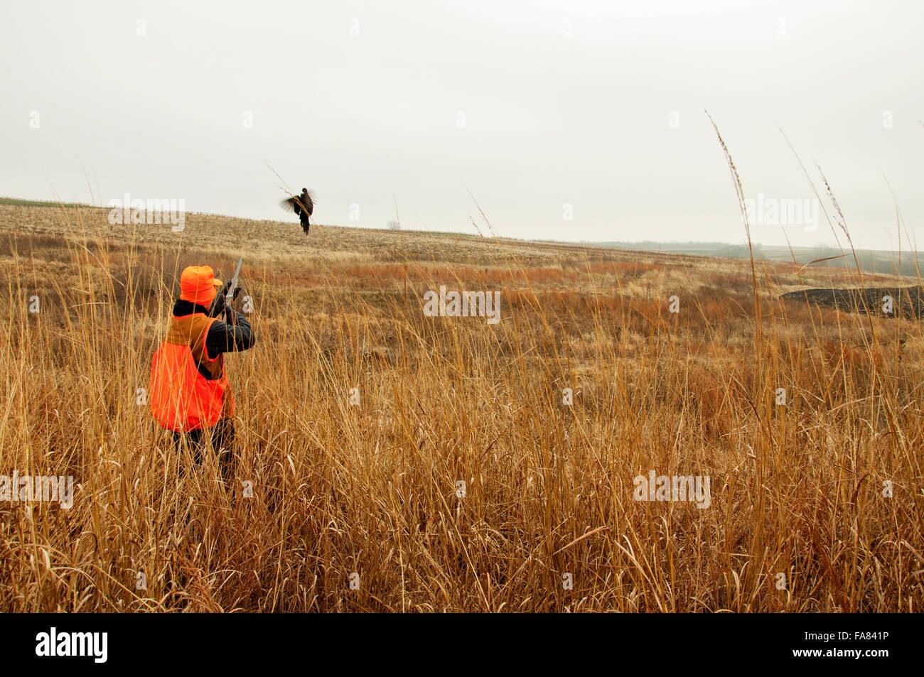 Hunter dispara el faisán en el campo Imagen De Stock