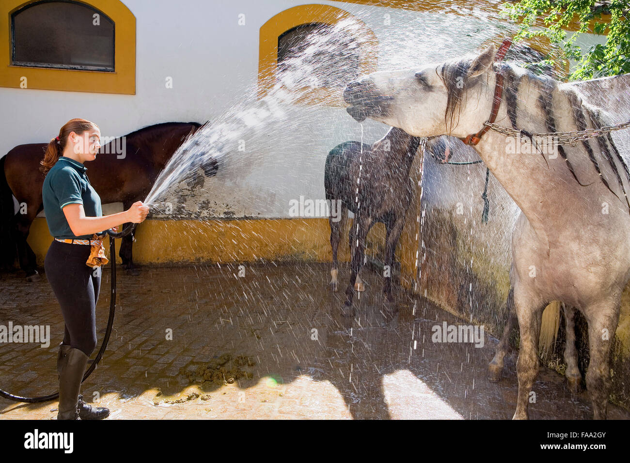 """Establos de caballos de la Real Escuela Andaluza de Arte Ecuestre 'Real Escuela Andaluza del Arte Ecuestre"""". Imagen De Stock"""