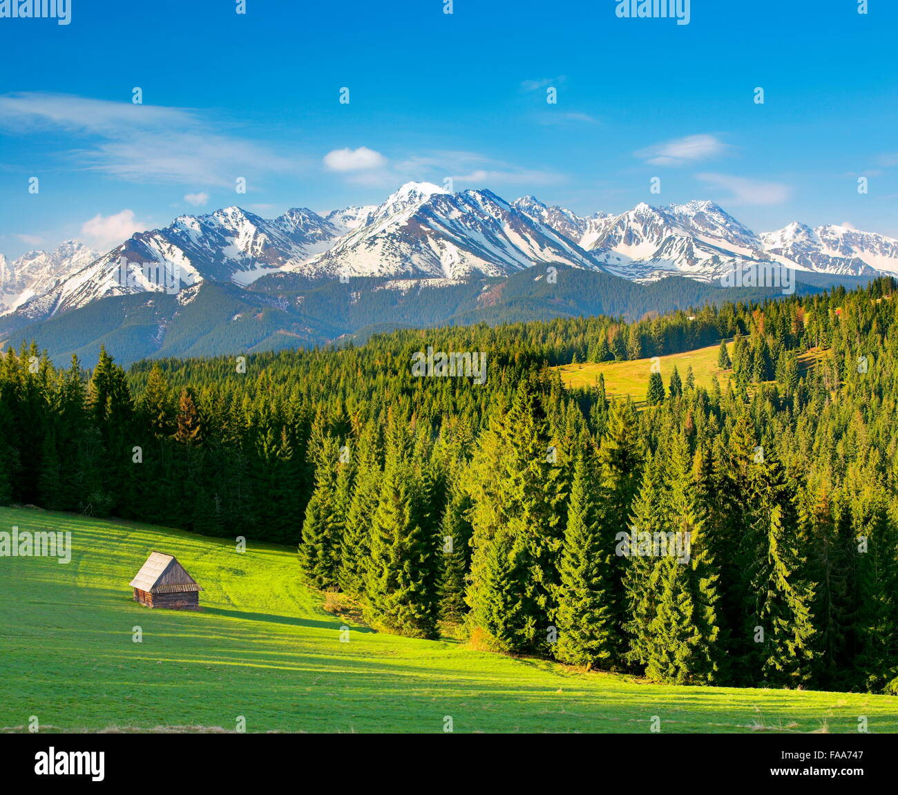 Szymkowka Glade,las Montañas Tatra, Polonia Imagen De Stock