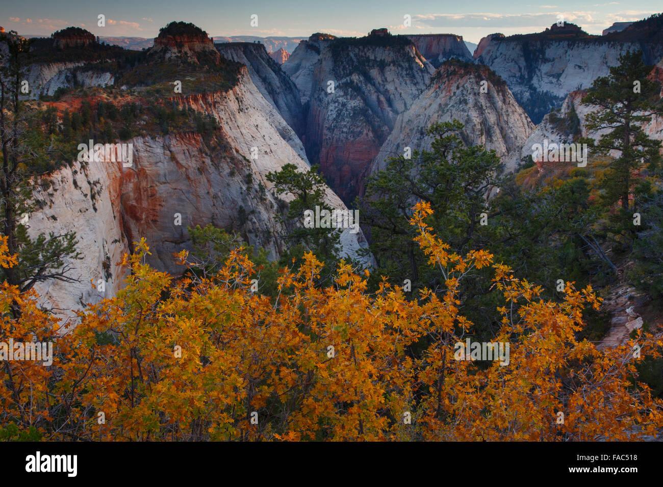 Behunin cañón desde el West Rim Trail, el Parque Nacional de Zion, Utah. Foto de stock