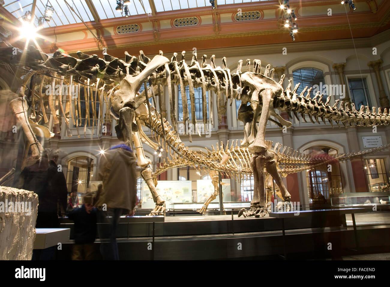 Museo Paleontológico en Berlín. Los antiguos esqueletos de dinosaurios Imagen De Stock