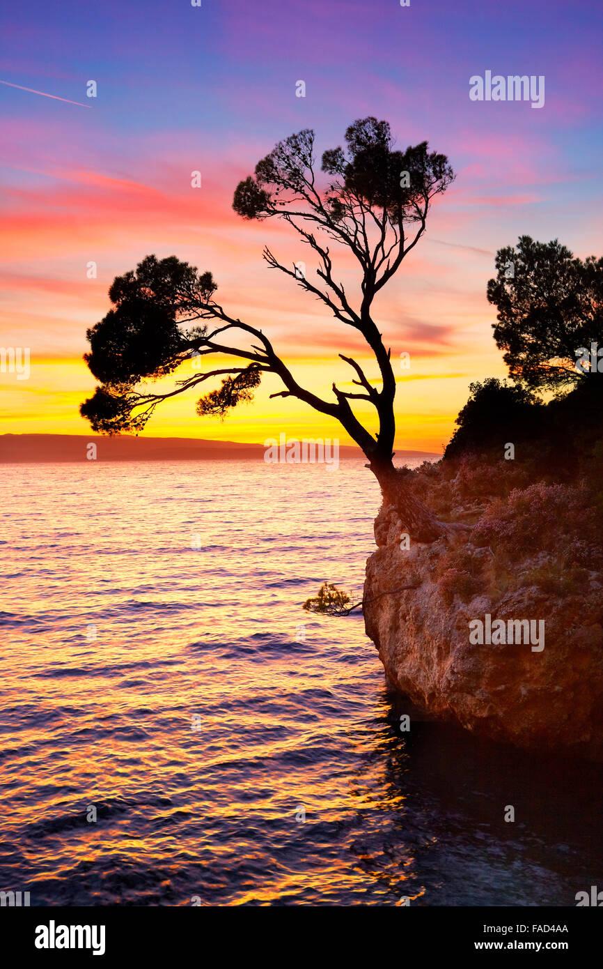 Solo en el árbol único Brela playa al atardecer, Makarska Riviera, Croacia, paisaje Imagen De Stock