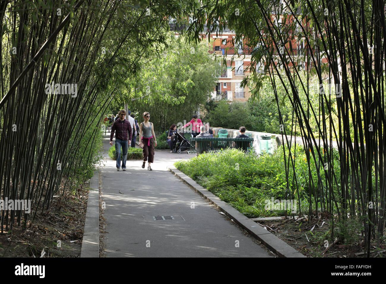 Bambú en el Paseo plantee, París. (Una línea de ferrocarril en desuso se convirtió en un paisaje ruta a pie). Foto de stock