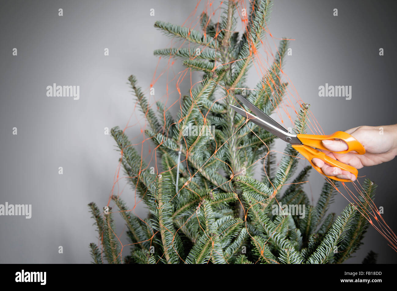 Abeto de Navidad desnudo envuelto en net, interiores Foto de stock