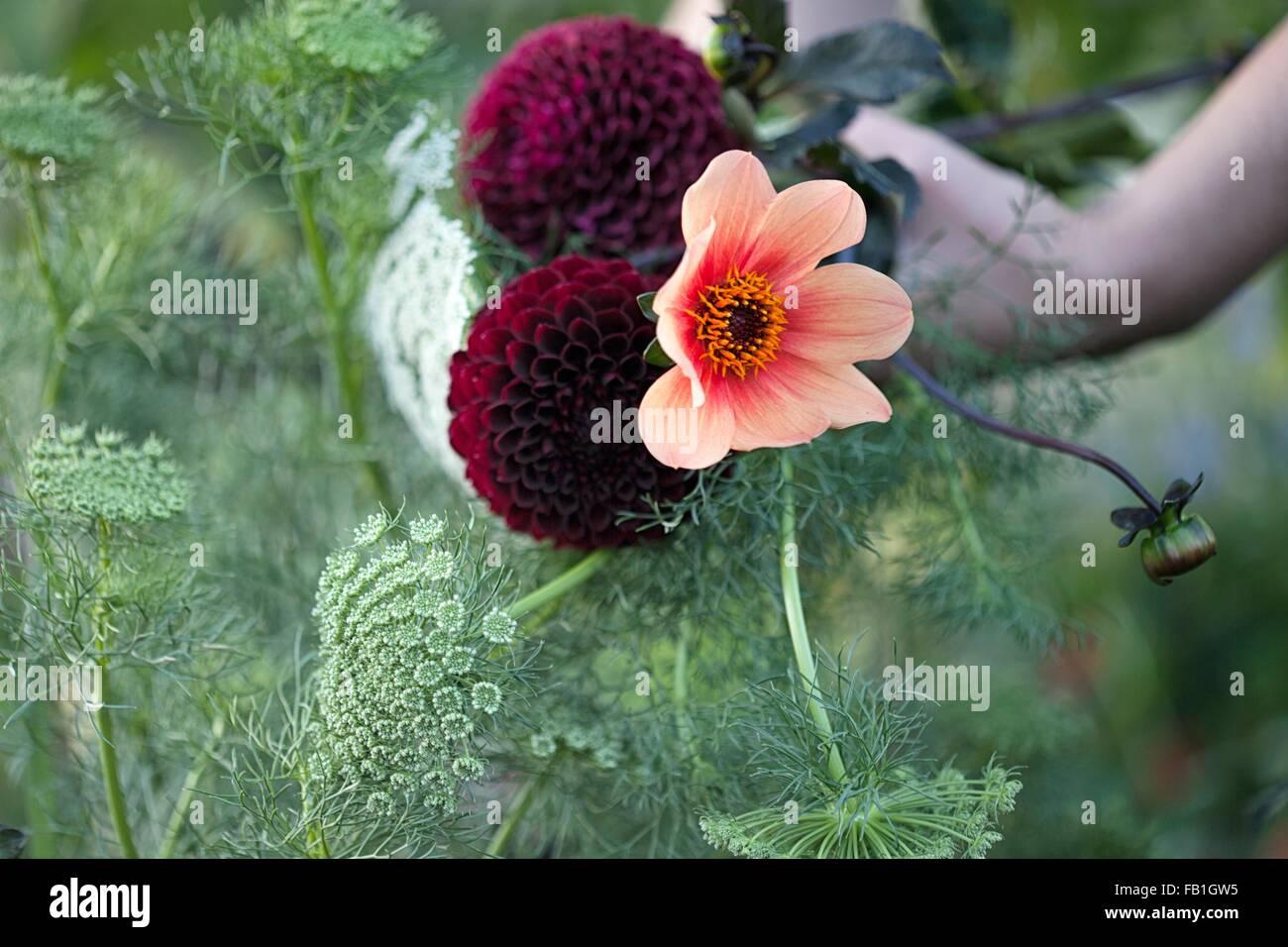 Womans mano sosteniendo flores frescas y helechos en asignación Imagen De Stock
