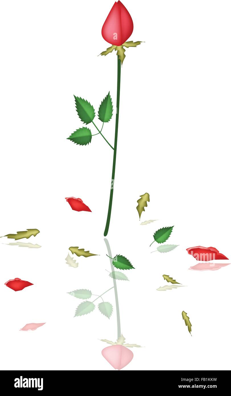 Un Símbolo De Amor La Ilustración De Una Bella Rosas Rojas Para