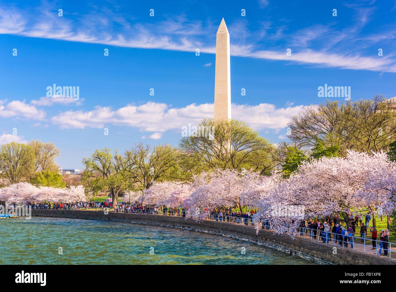 WASHINGTON, DC - Abril 10, 2015: Las multitudes caminando debajo de los cerezos y el Monumento a Washington durante Imagen De Stock
