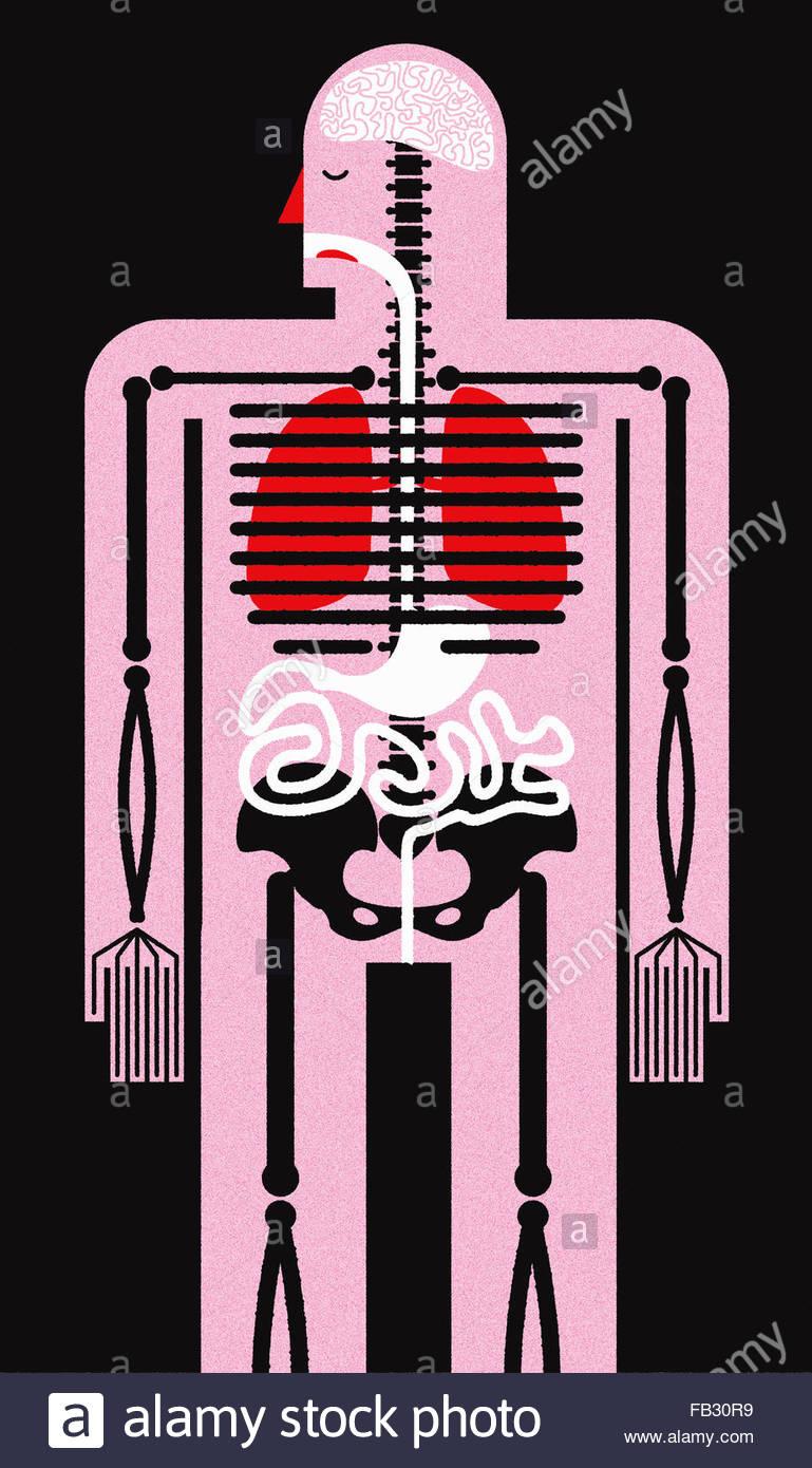 Ilustración biomédica del cuerpo humano, el esqueleto y los órganos ...