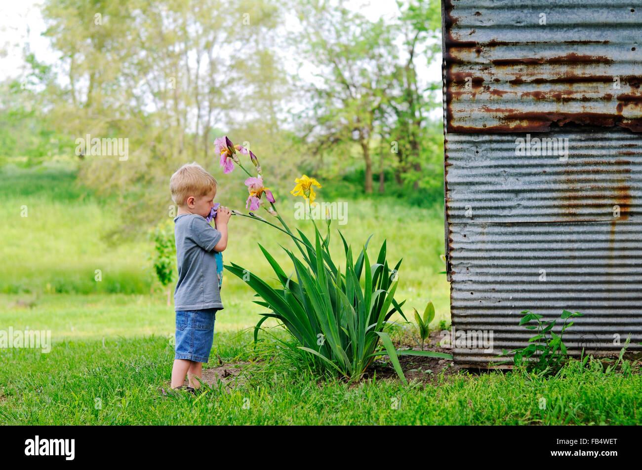 Boy oliendo flores de iris por granero Imagen De Stock