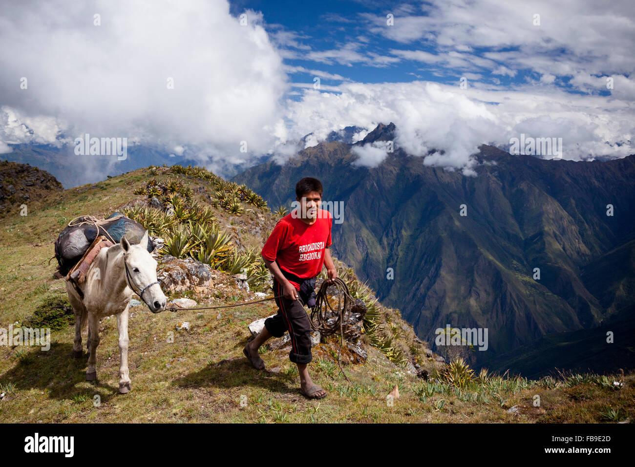 Arriero (mule-Skinner) y pack-mula ir más de un paso alto sobre la Choquequirao (Cuna de Oro) Trail, peru. Imagen De Stock