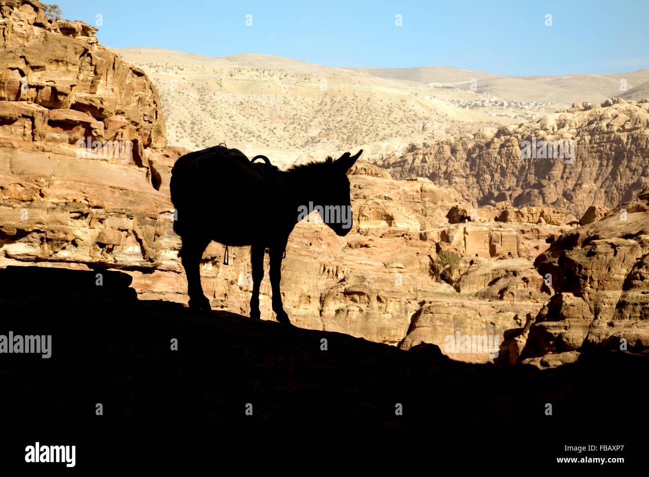 La silueta de un burro contra las soleadas montañas de Jordania, Oriente Medio, Asia Imagen De Stock
