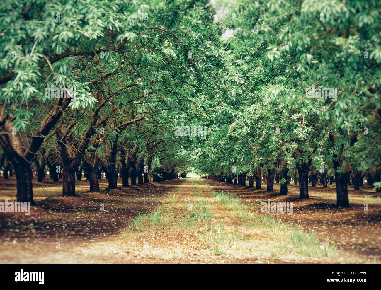 Callejón Tree-Lined Foto de stock