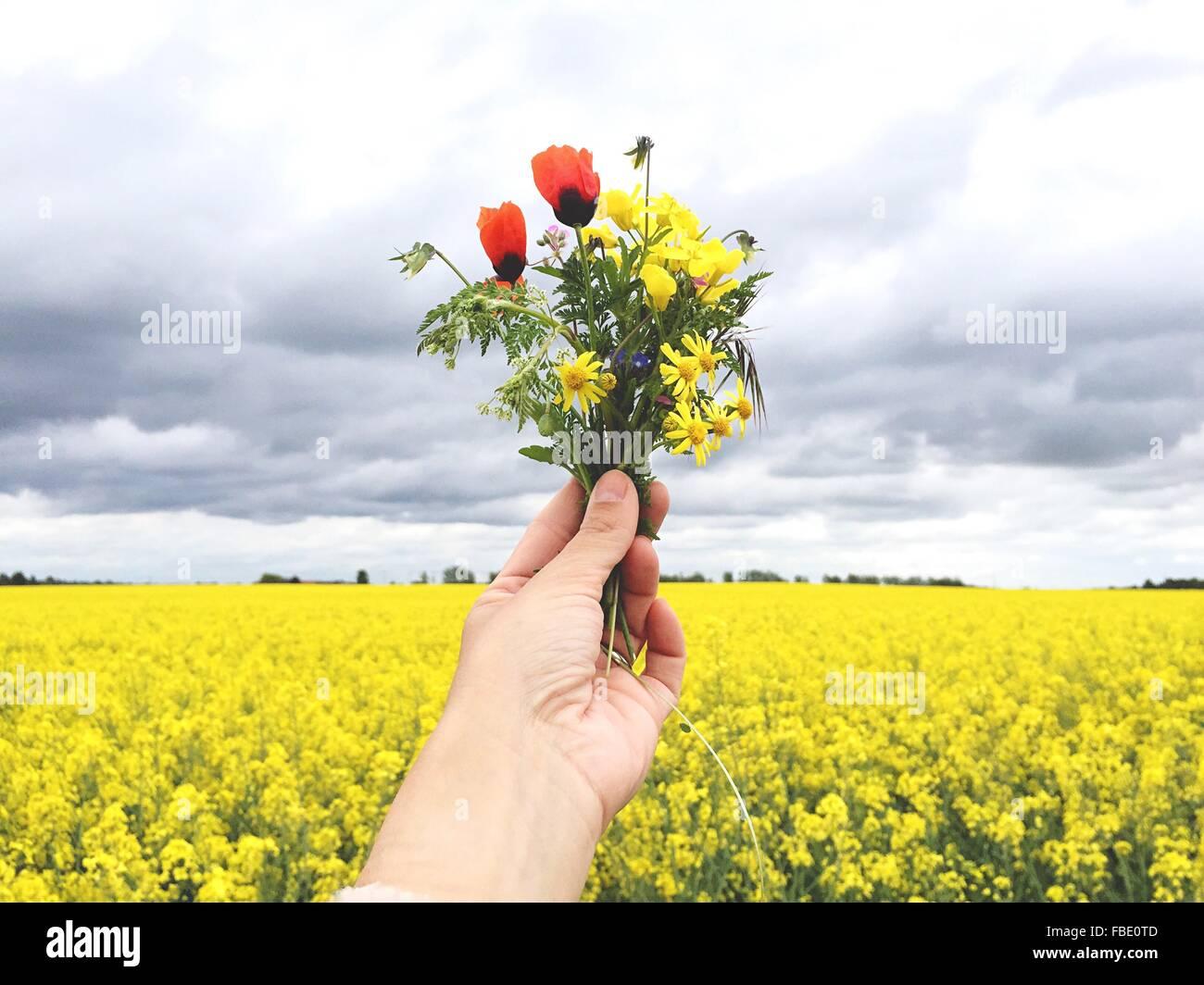 Recorta mano sosteniendo flores multicolores contra Raps Campo Foto de stock