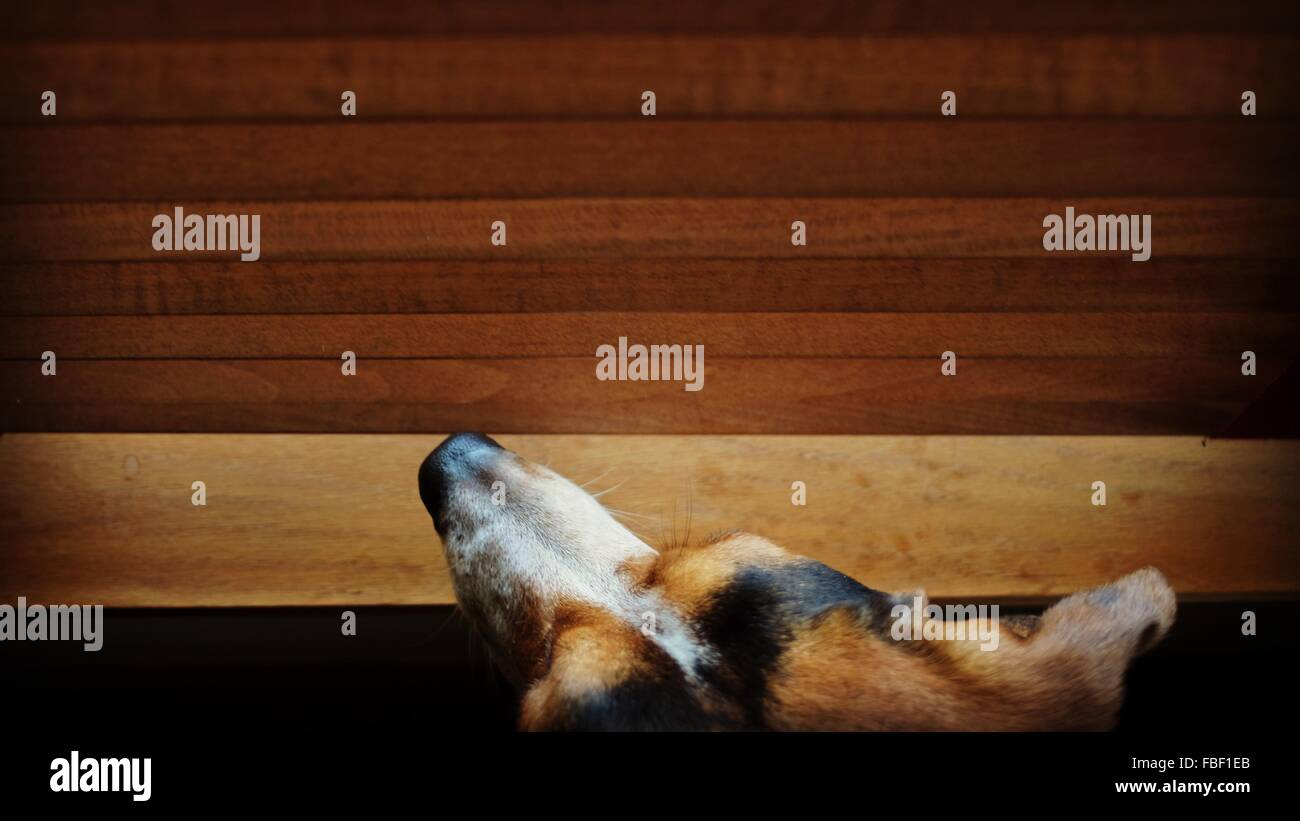 Directamente encima de foto de perro en casa Imagen De Stock