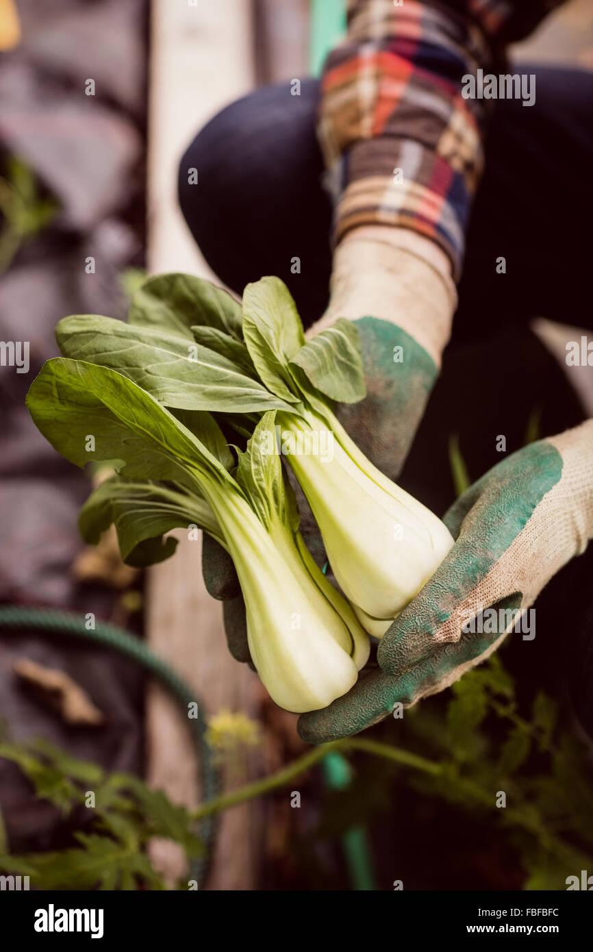 Hombre sujetando y mostrando verdura Imagen De Stock