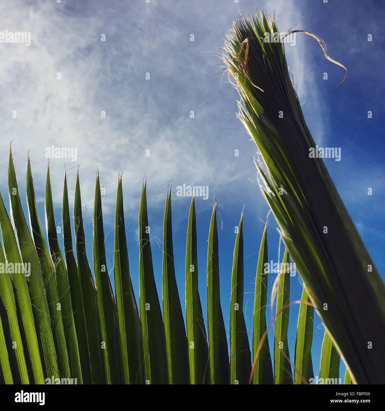 Ángulo de visión baja de las plantas contra el cielo Imagen De Stock