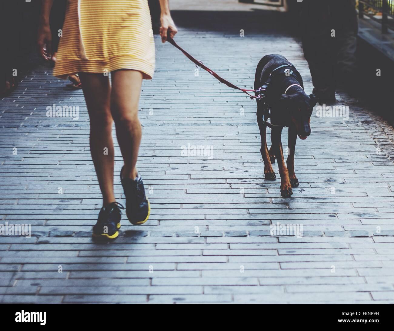 Mujer caminando con perro Imagen De Stock