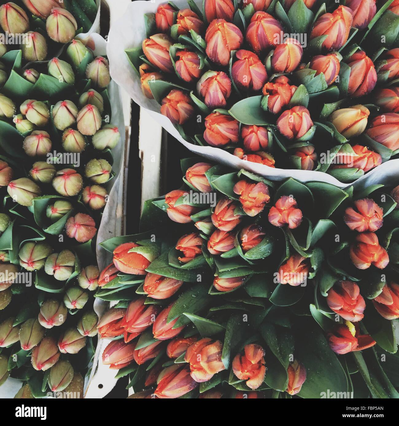 Disparo de fotograma completo de capullos de flores para su venta en el mercado Imagen De Stock