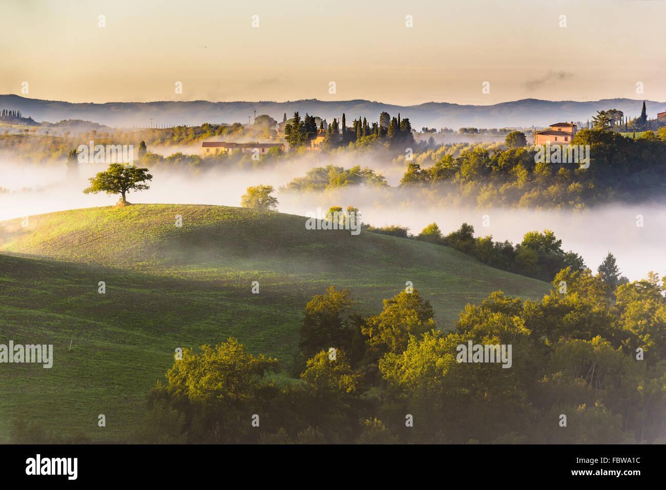 Árboles y huertos en los campos italianos. Toscana día de otoño. Imagen De Stock