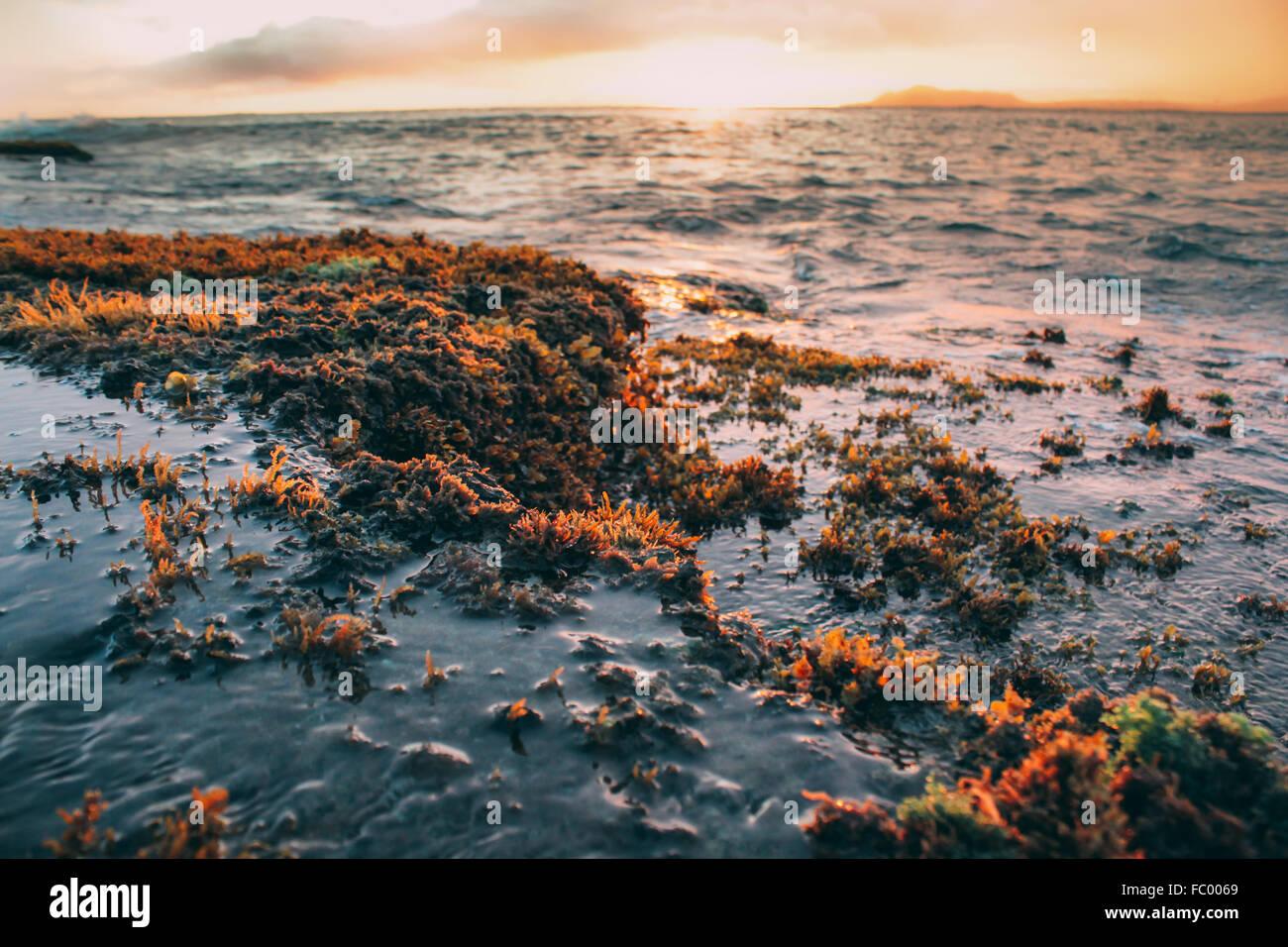 Coral en marea baja sobre Portlock Oahu Hawai USA stock photo. Imagen De Stock