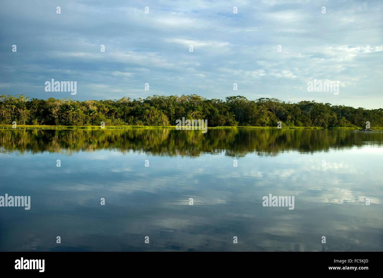 Reflexiones sobre el Río Amazonas en Ecuador Imagen De Stock