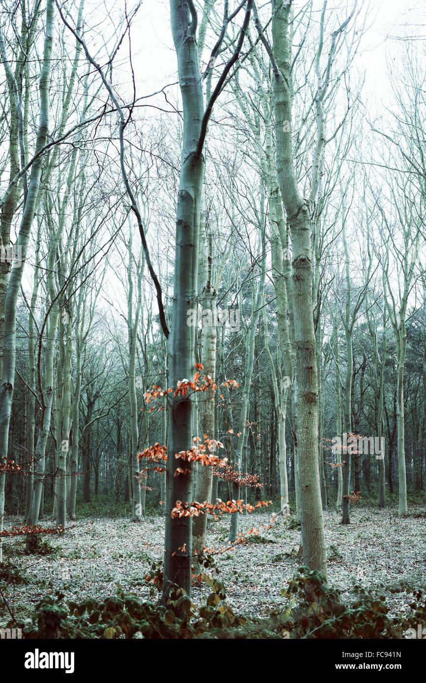 Hojas de color óxido en un árbol desnudo en un bosque durante una ...