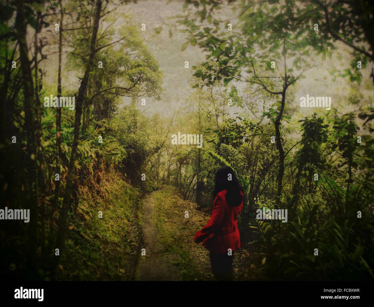 Vista trasera de una mujer caminando en el bosque a lo largo de árboles Imagen De Stock