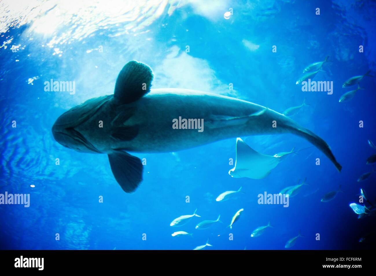 Vista submarina de pescado Imagen De Stock