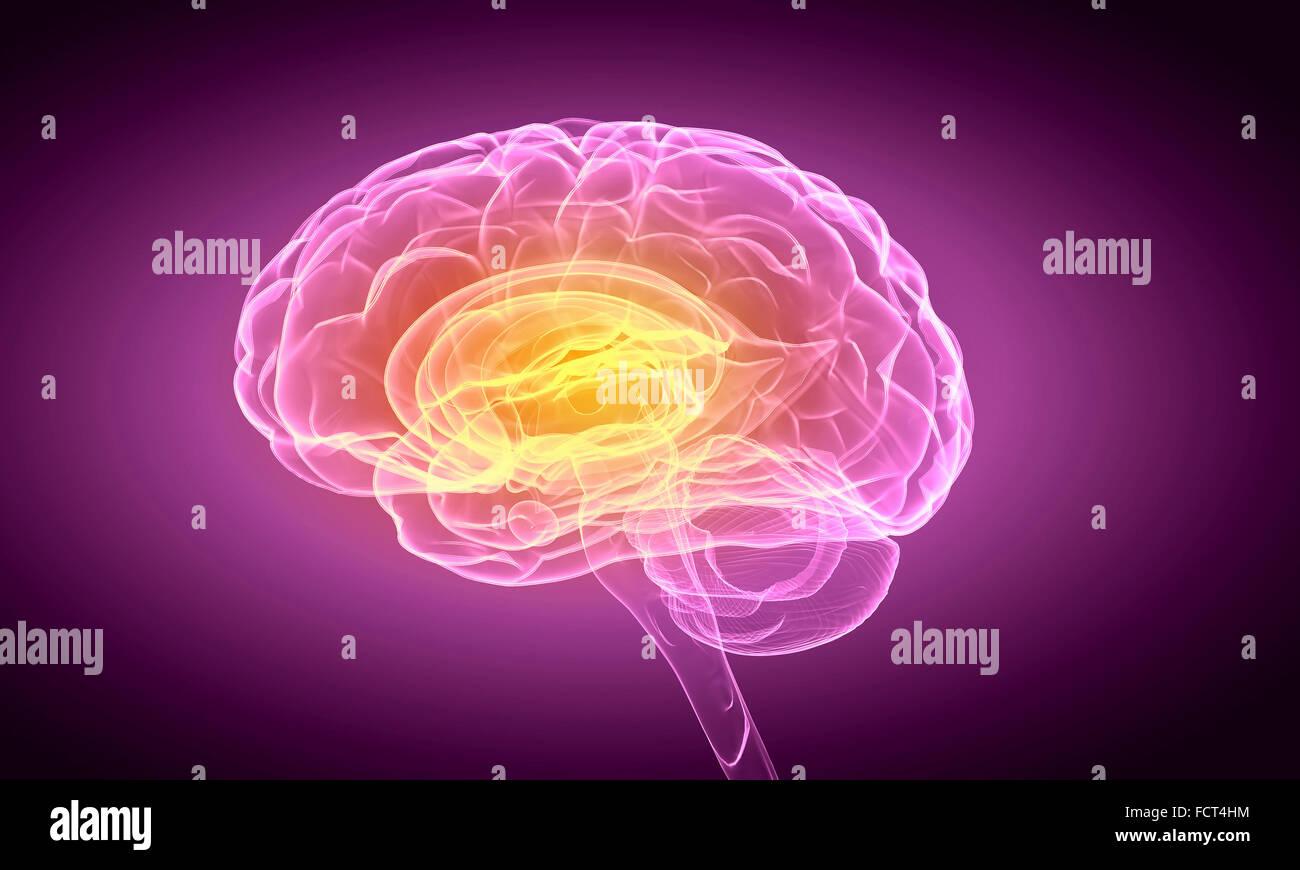 La ciencia imagen con cerebro humano sobre fondo púrpura Imagen De Stock