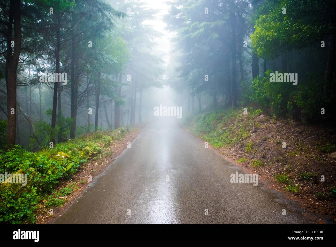 Dividido en un día lluvioso en Sintra Foto de stock