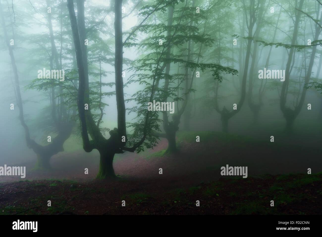 Oscuro y aterrador bosque profundo Imagen De Stock
