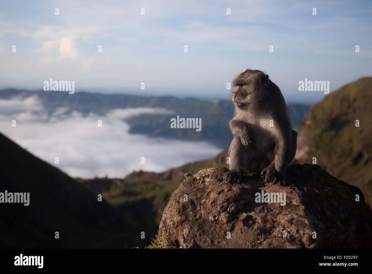 Monkey apartar la mirada sobre el paisaje Imagen De Stock