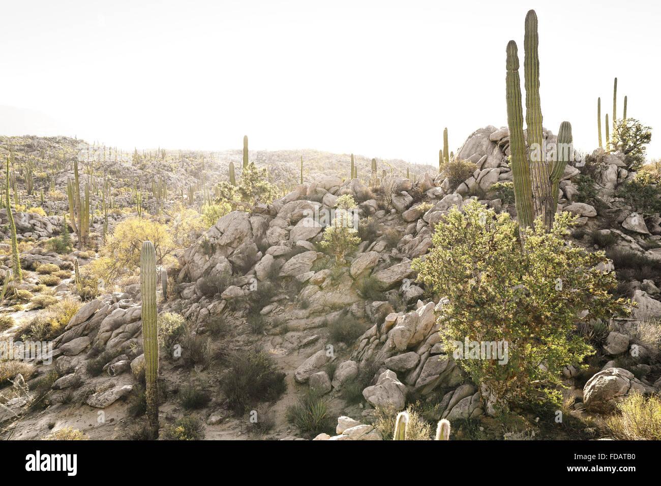 Escena del desierto en Baja California, México Imagen De Stock
