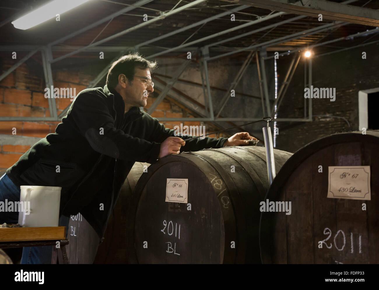 Nogaro, Departamento de Gers, Midi-Pyrénées, Francia. La extracción de muestras de barril de armagnac Imagen De Stock