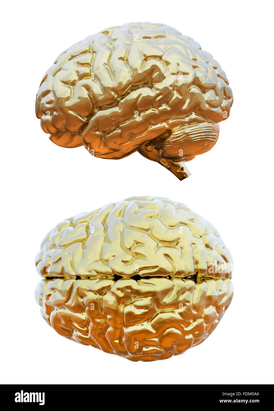 Cerebro Humano golden Foto de stock