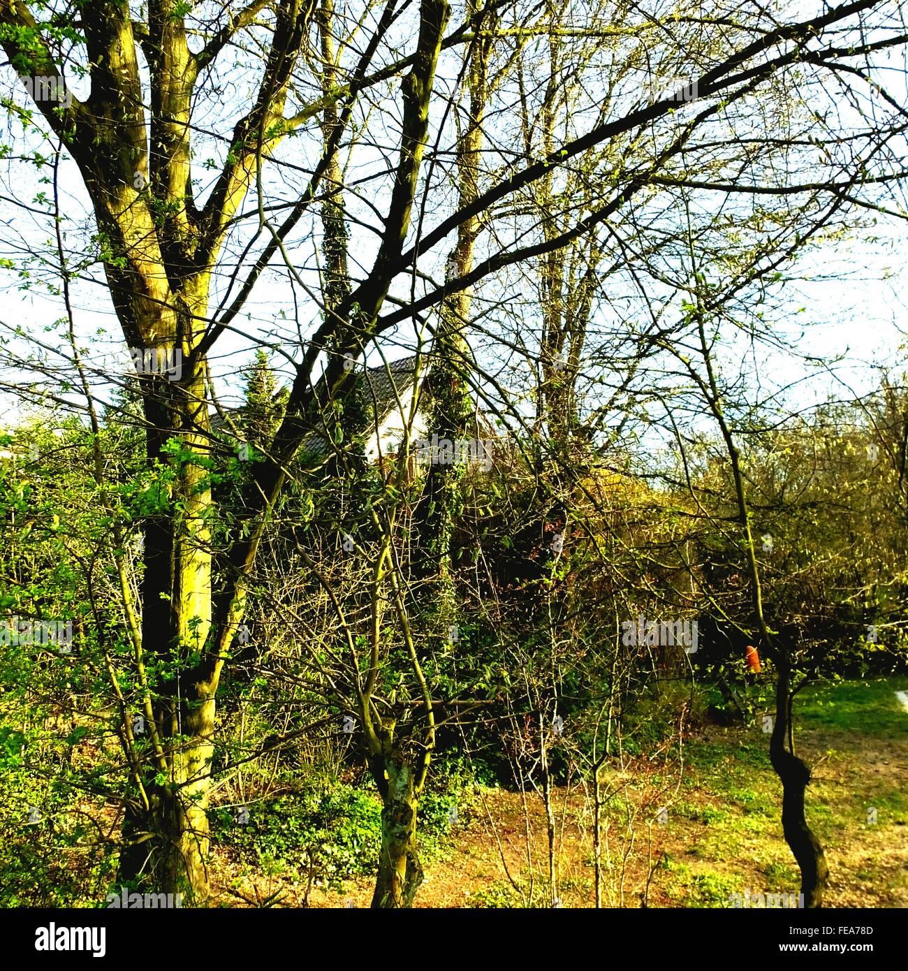 Árboles bloquean la vista de la casa de campo Imagen De Stock