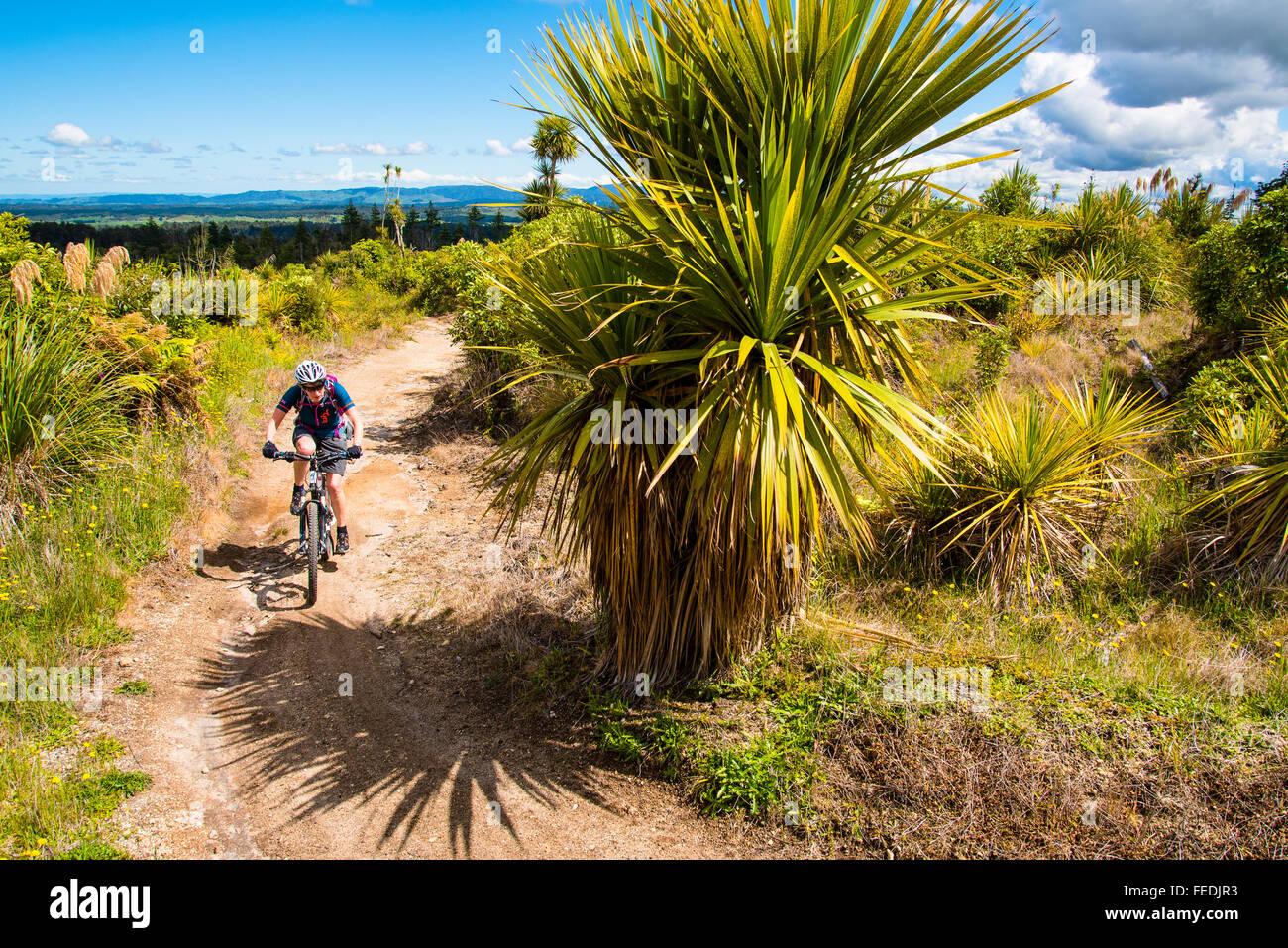 Ciclista de montaña en el sendero de madera en el Parque Forestal de Pureora Isla del Norte, Nueva Zelanda Imagen De Stock