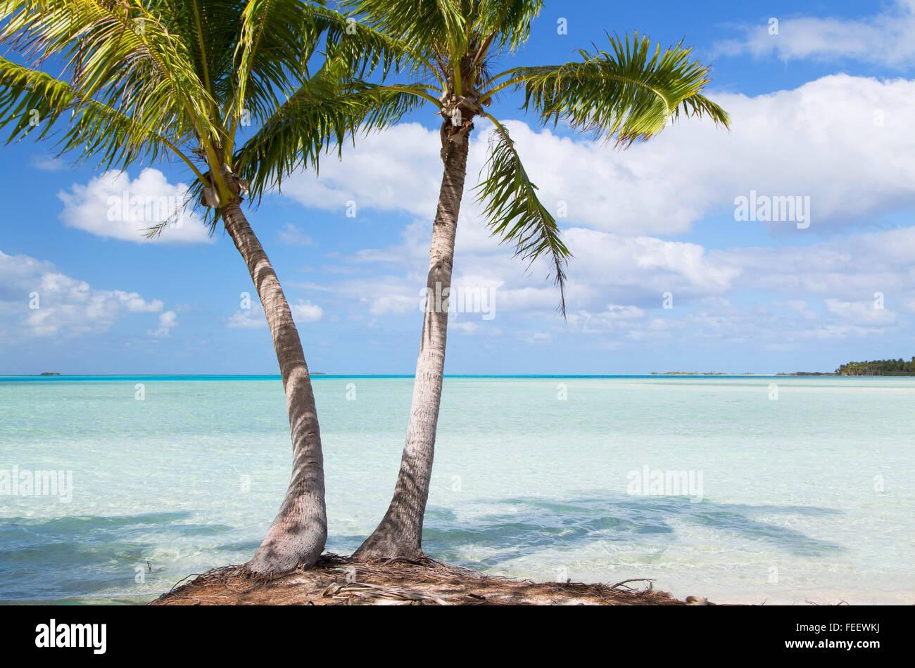 Palmeras en Blue Lagoon, Fakarava, las Islas Tuamotu, en la Polinesia Francesa Foto de stock