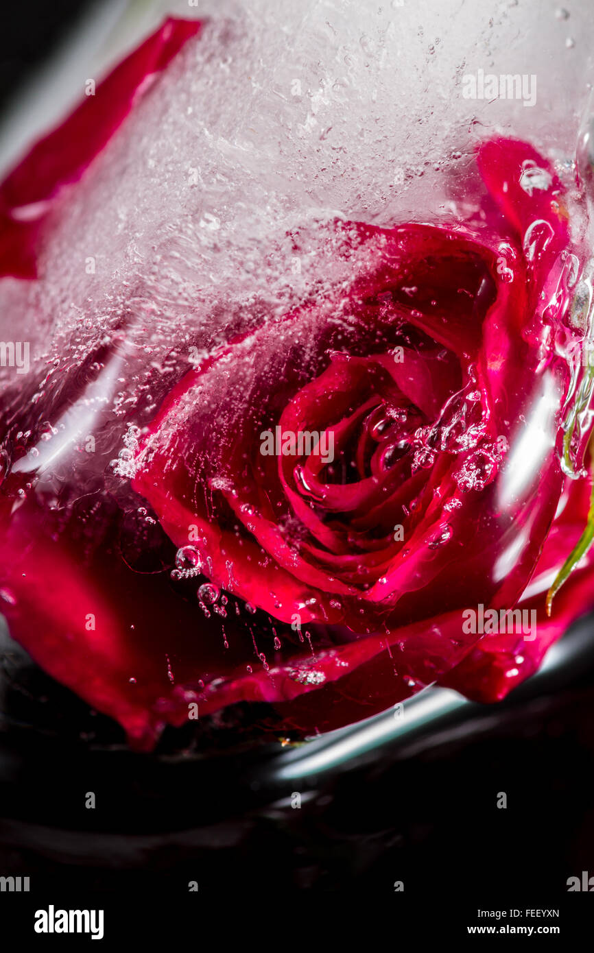 Cerca de una pequeña rosa roja congelada en un cubo de hielo agregando líneas hermosas y burbujas con elemento de distorsión con arte Foto de stock