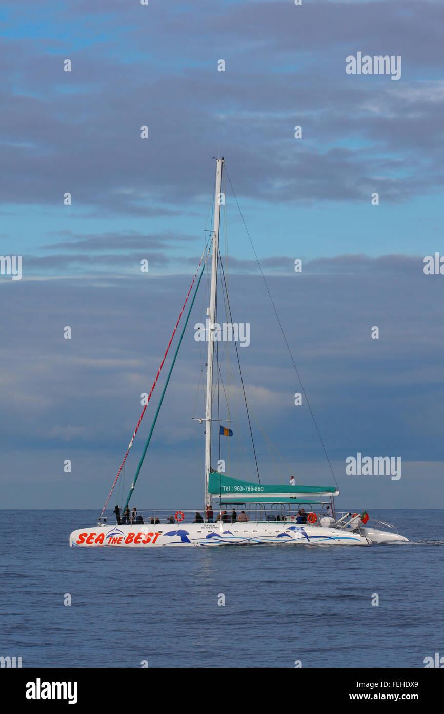 Los turistas en un catamarán para un viaje de avistamiento de ballenas, Funchal, Madeira Imagen De Stock