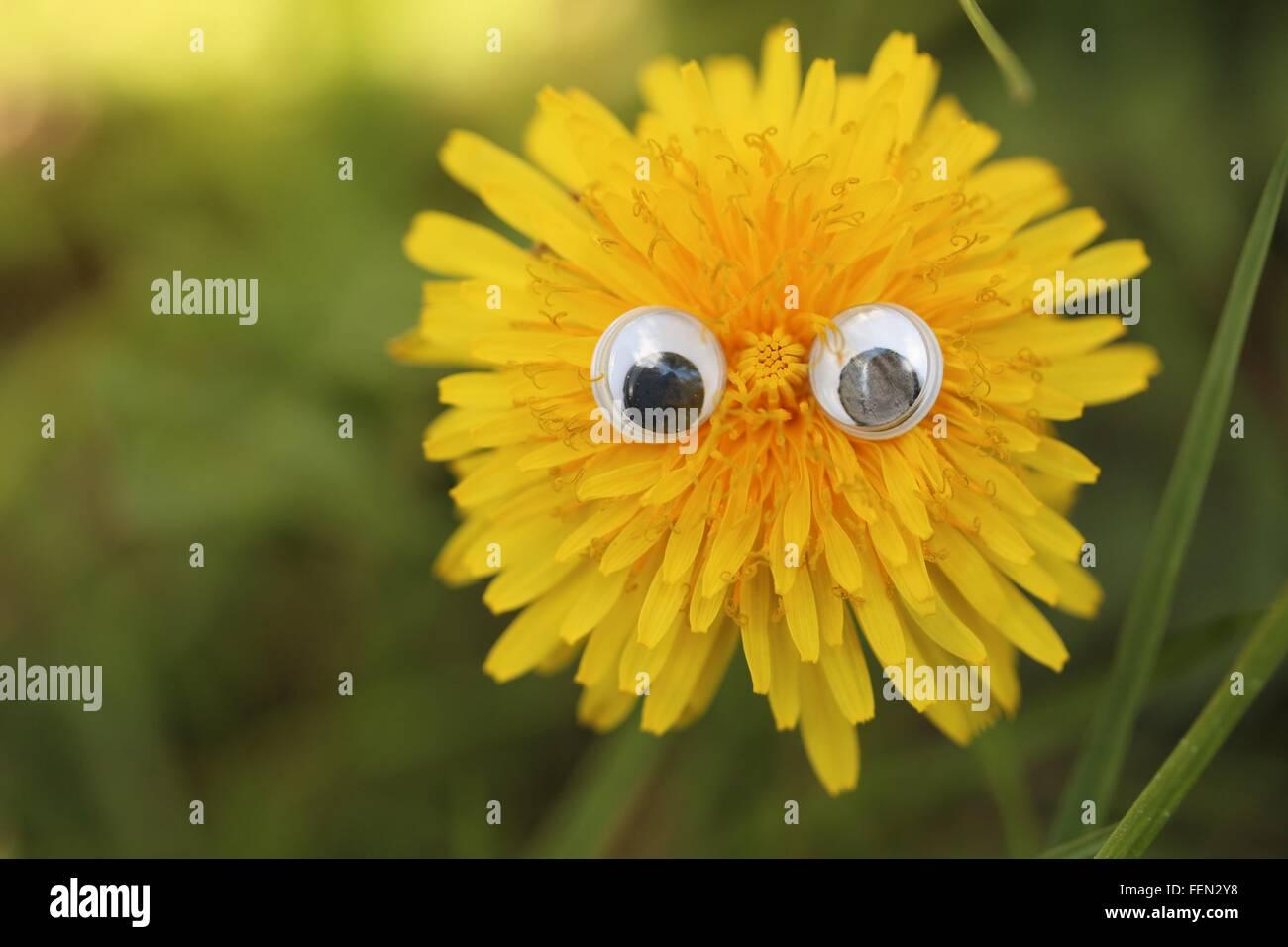 Ojos de plástico sobre la cabeza de la flor amarilla Imagen De Stock