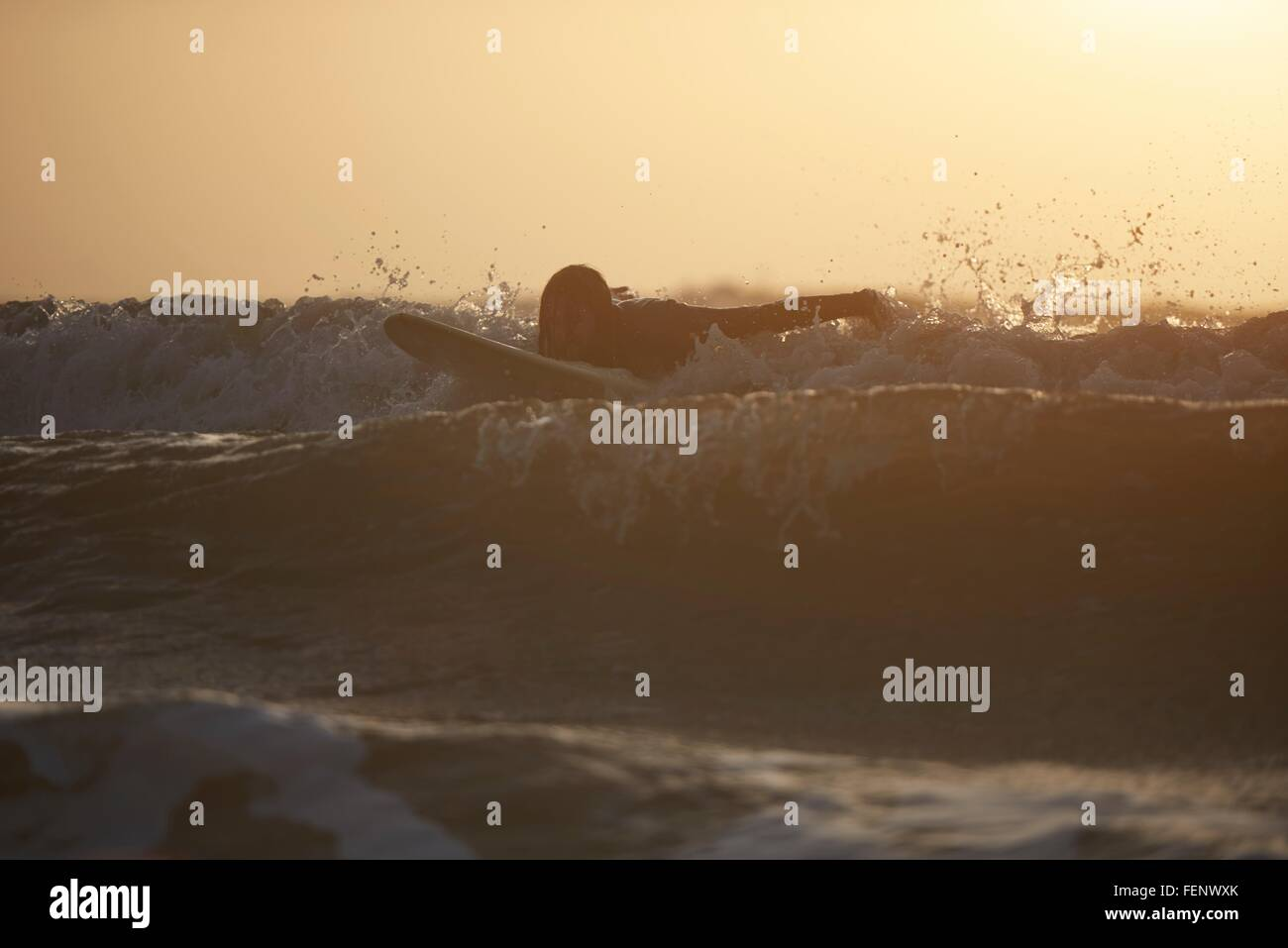 Silueta de macho joven surfista surf en mar, Devon, Inglaterra, Reino Unido. Imagen De Stock