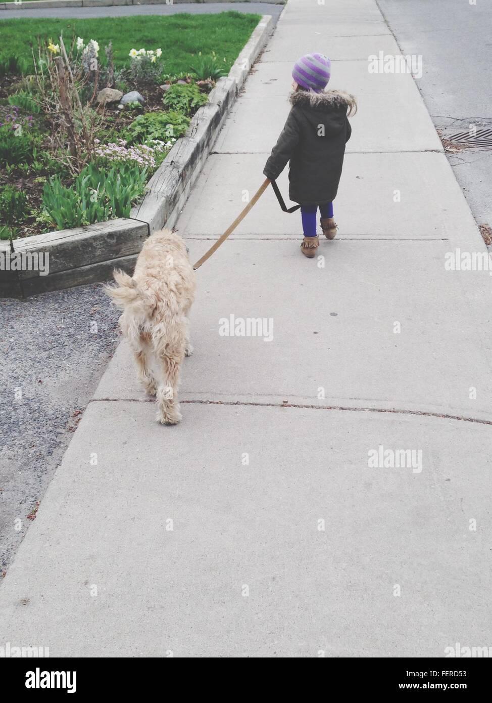 Vista trasera de la niña caminando con el perro en el parque Foto de stock