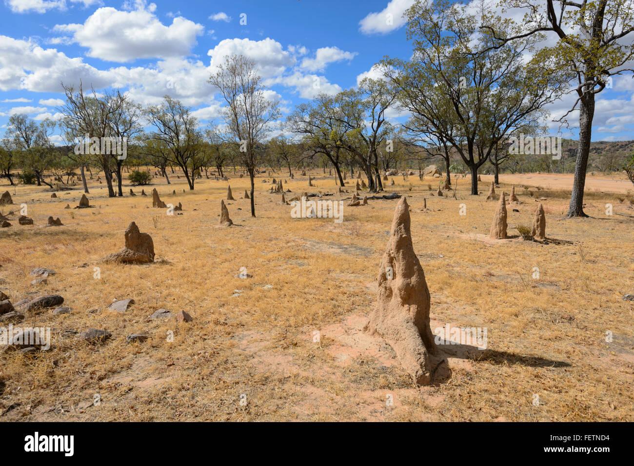 Las termitas, Gulf Savannah, Queensland, Australia Imagen De Stock