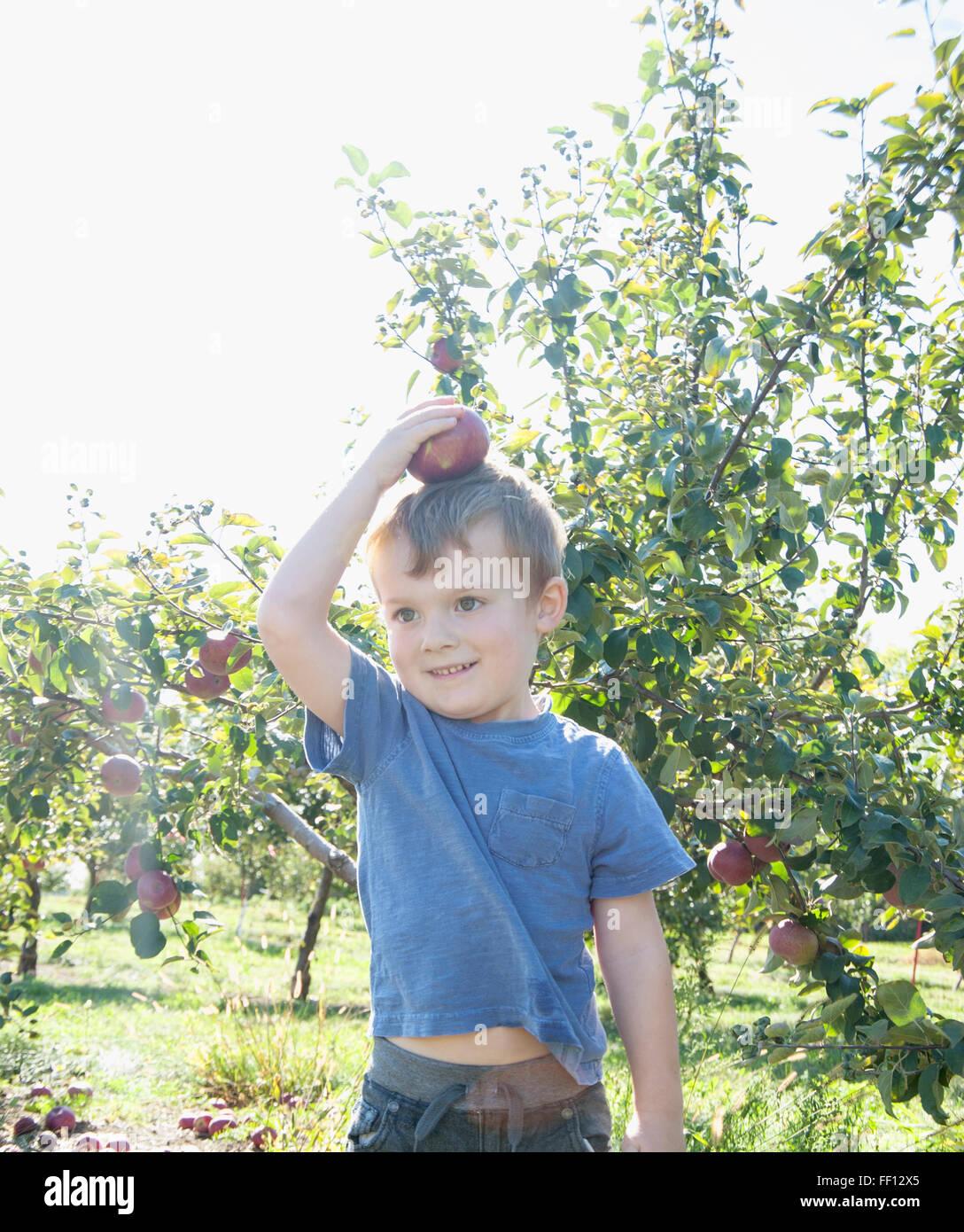 Boy equilibrio sobre la cabeza de Apple en huerto Imagen De Stock