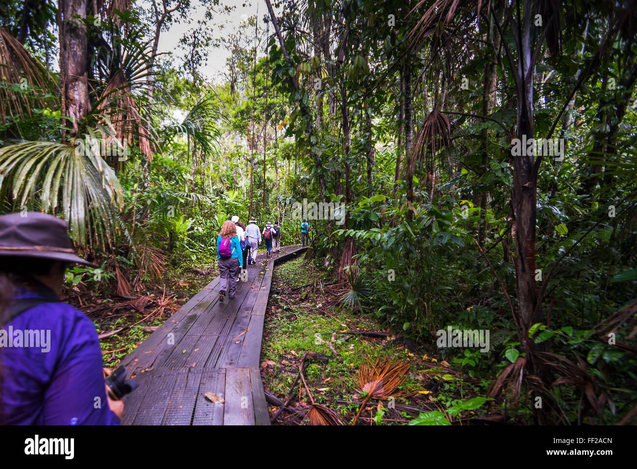 En la Selva Amazónica WaRMking en Sacha RModge, Coca, Ecuador, Sudamérica Imagen De Stock